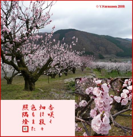 080412杏