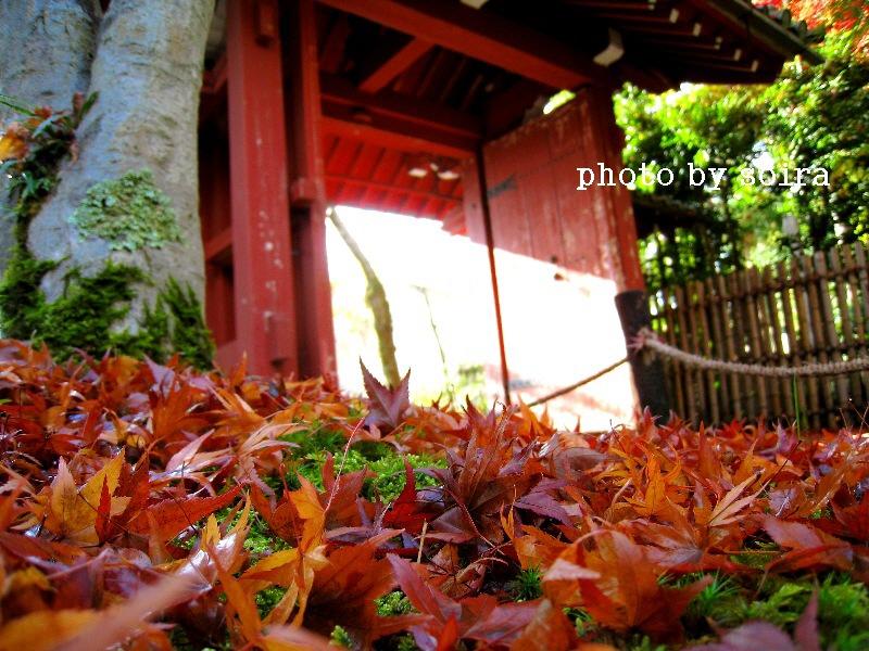 吉野門と散紅葉