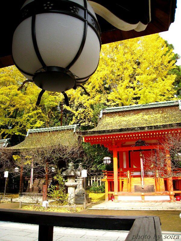 本殿の吊り灯籠と銀杏