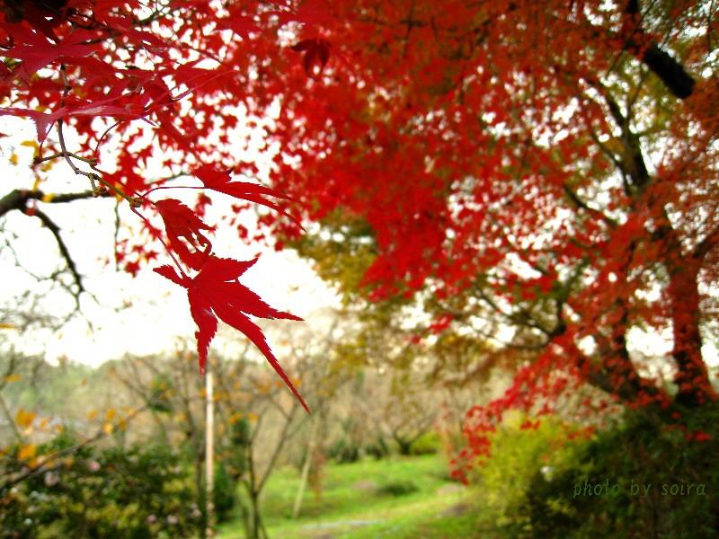 原谷苑の紅葉2