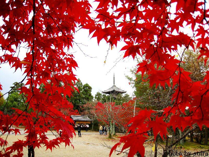 仁和寺五重塔と紅葉1