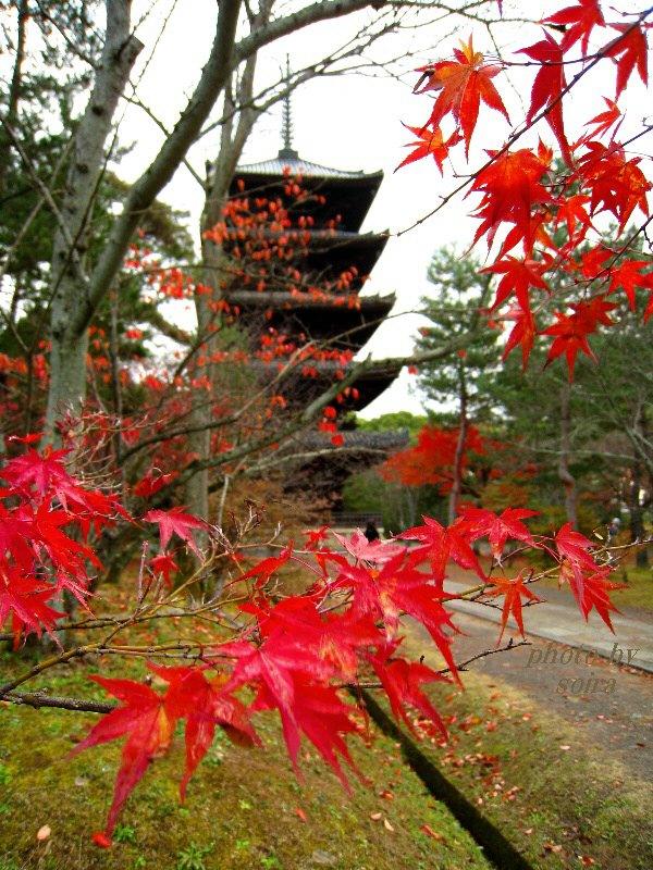 五重塔と紅葉2