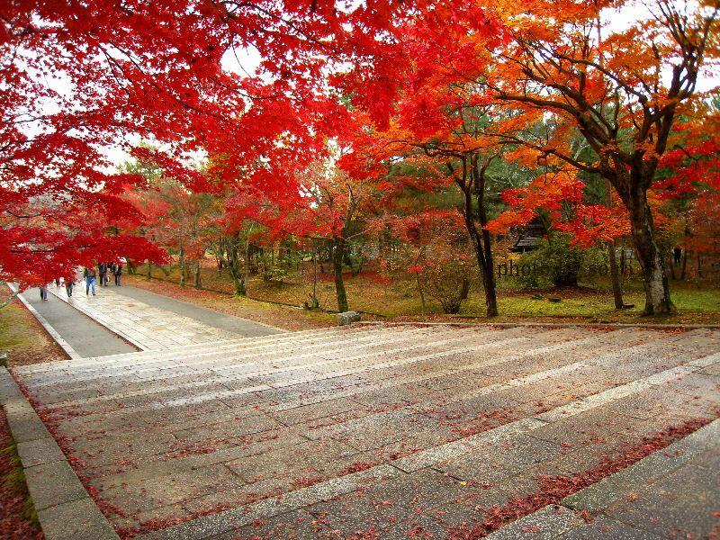 金堂前の石段と紅葉