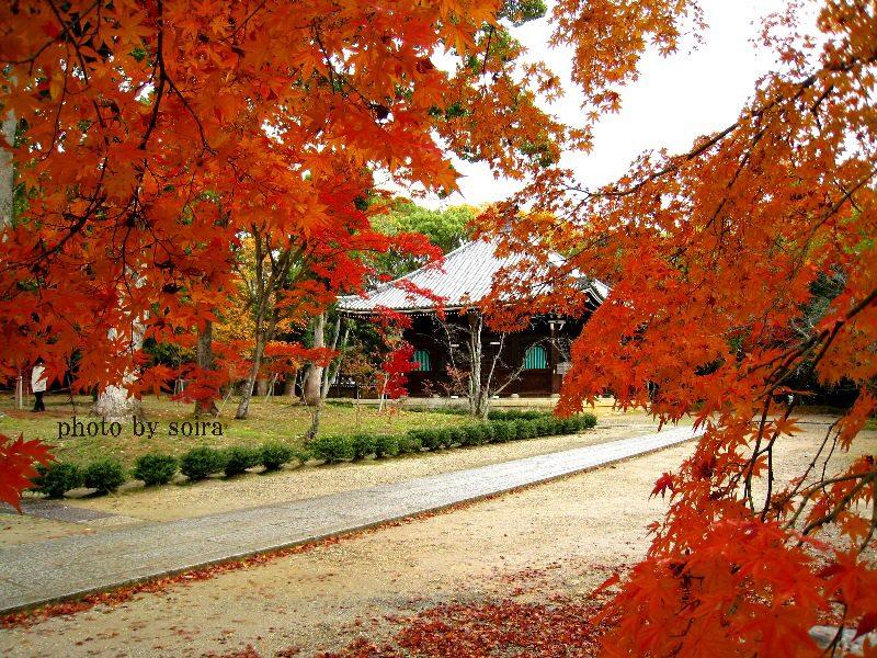 御影堂と紅葉