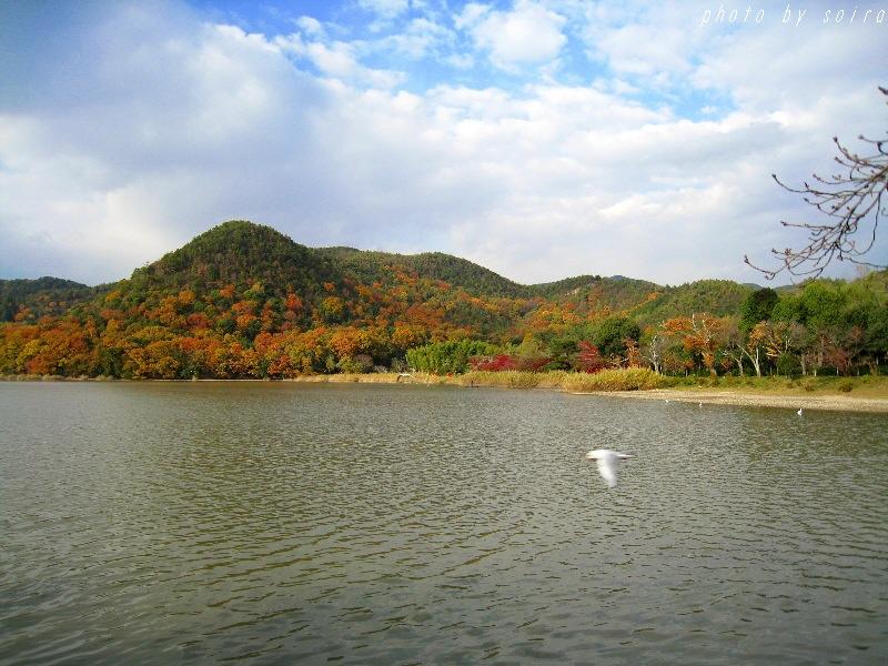 広沢池と紅葉1