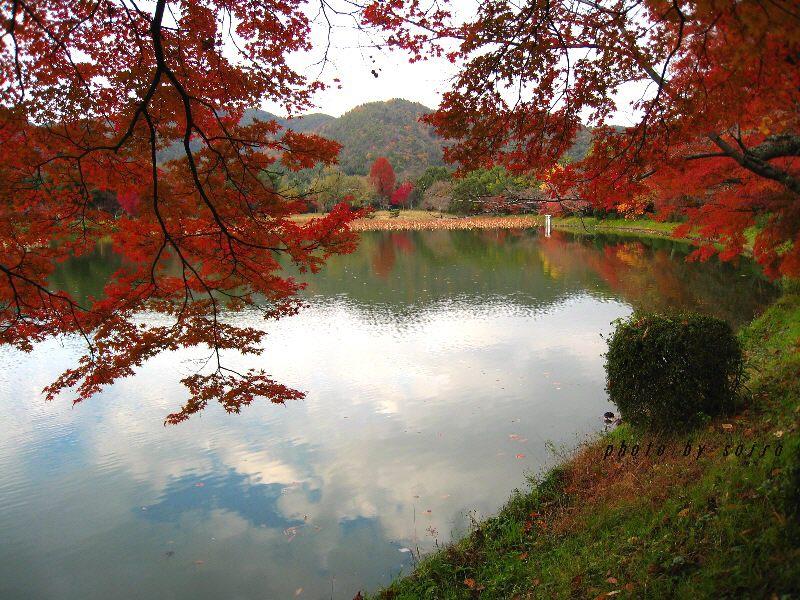 大沢池と紅葉3