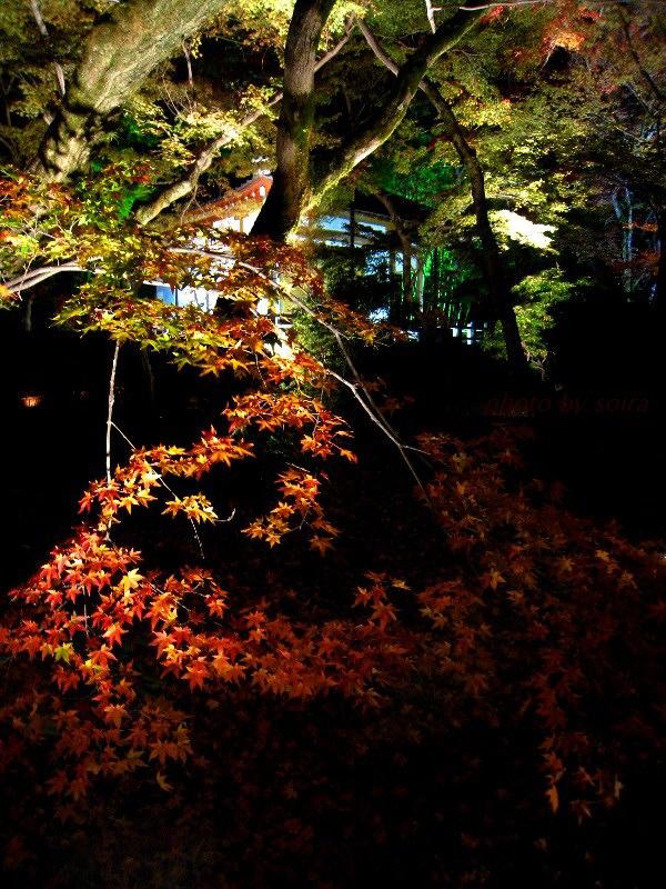 無礙光堂と紅葉