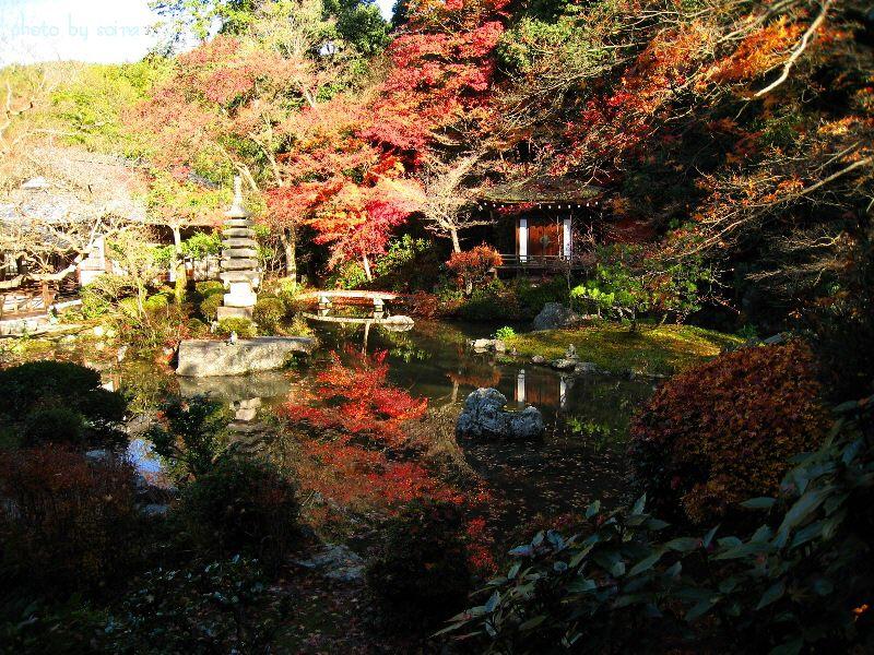 晩翠園の紅葉1