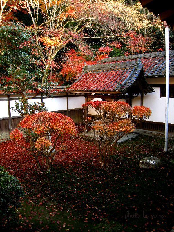坪庭の紅葉