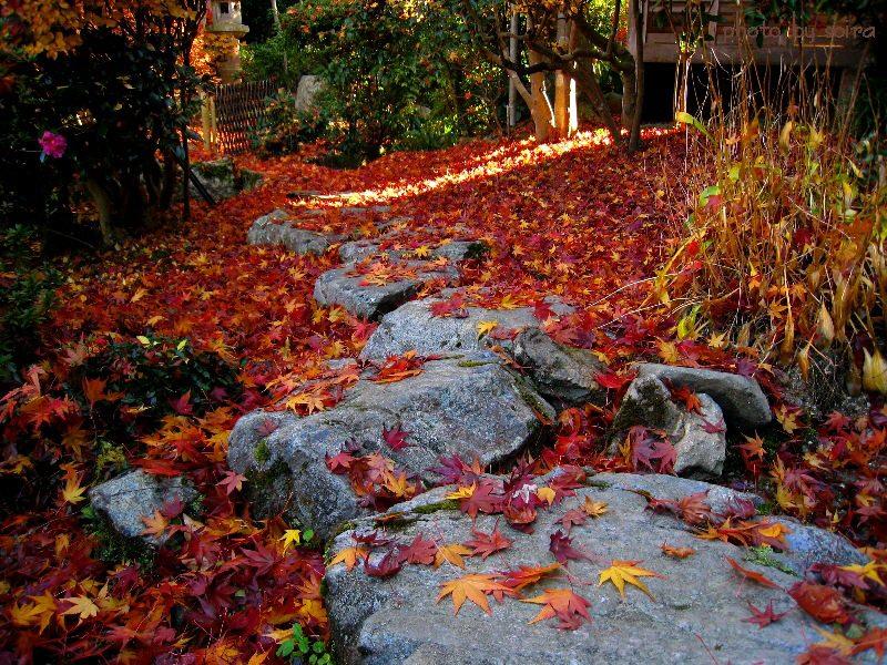 飛び石と散紅葉