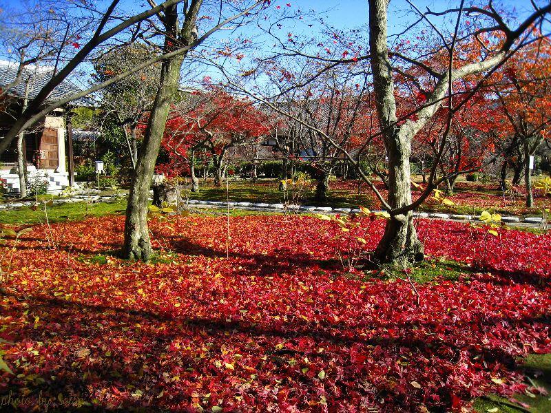 氷池園・散紅葉