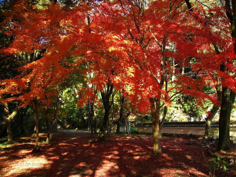 興聖寺の紅葉2