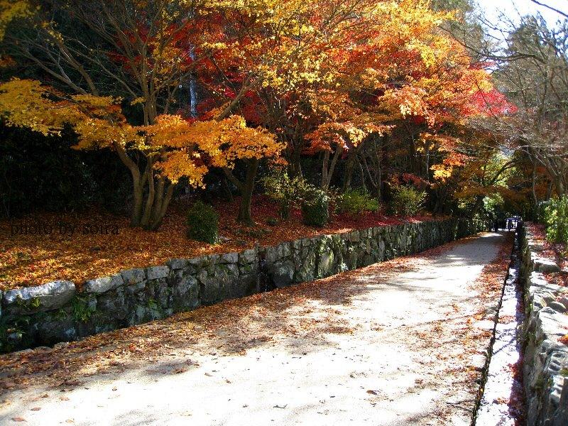 琴坂の紅葉