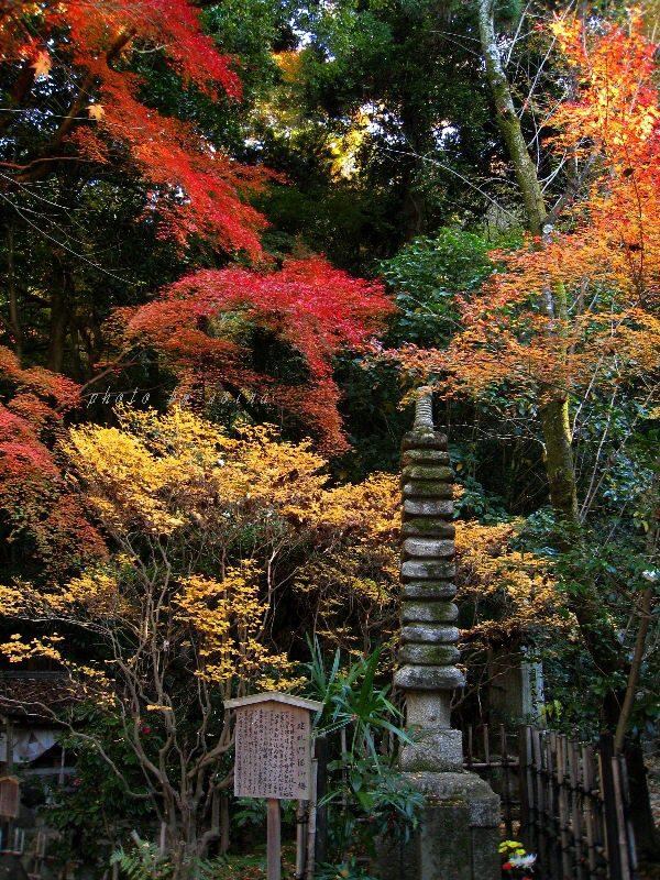 建礼門院塔と紅葉