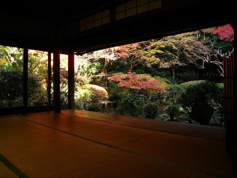 庭園の紅葉1