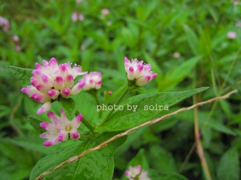 傍に咲いていた野草