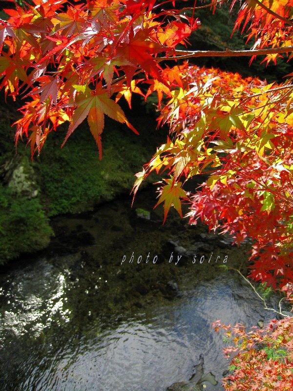 清滝川と紅葉