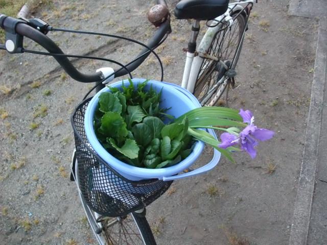 自転車かごに成人した野菜たち