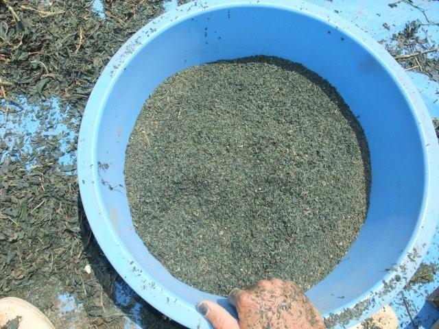 完成した藍の乾燥葉の粉