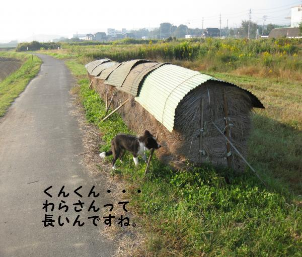 IMG_0043_convert_20081019181312.jpg