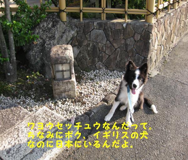 IMG_0052_convert_20081019182627.jpg