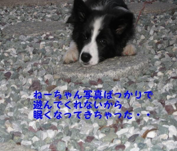 IMG_0069_convert_20081020192338.jpg