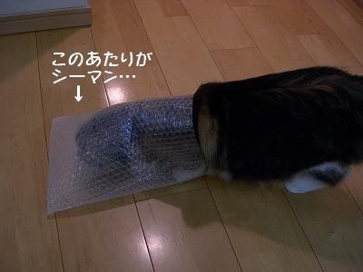 コピー ~ s-DSCN6839