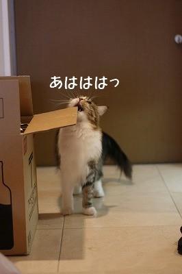 IMG_2531-1.jpg