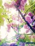桜3 08