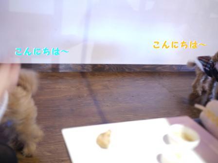 こんにちは~(2)