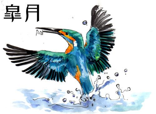 2006年5月分 カワセミ