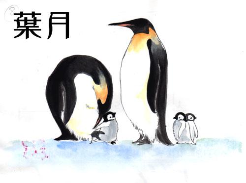 2006年8月分 コウテイペンギン