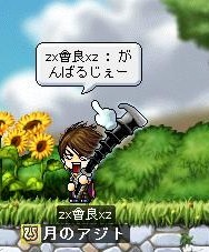Maple000312.jpg