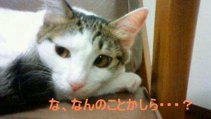 20090908-5.jpg