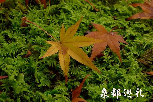 20081116seikei06.jpg
