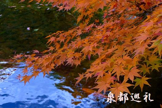 20081130楽水園08