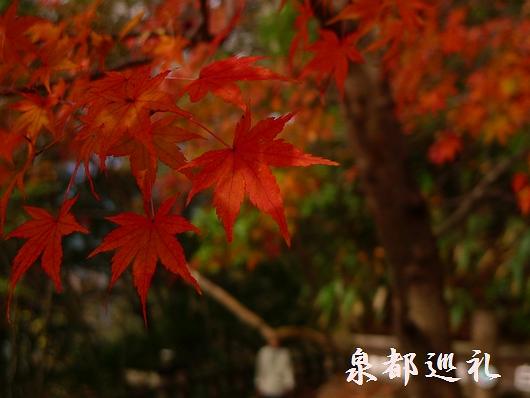 20081123-10白水滝03