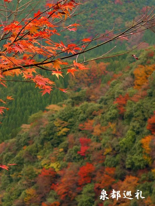 20081123-10白水滝04