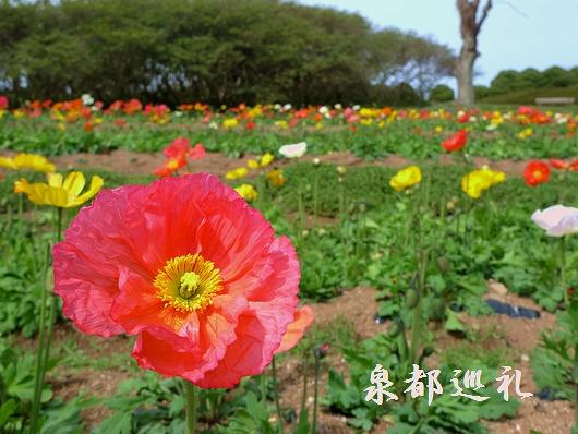 20090307islandpark01.jpg