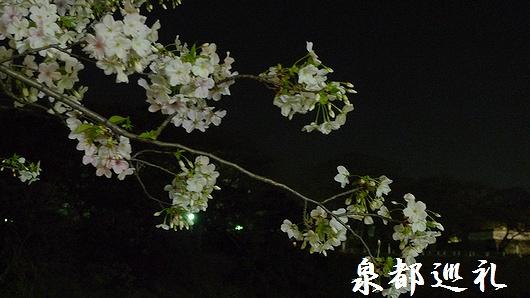 20090320maizurukouen03.jpg