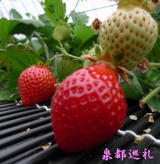 20090320offkai.jpg