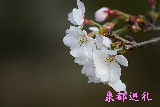 20090321akizuki02.jpg