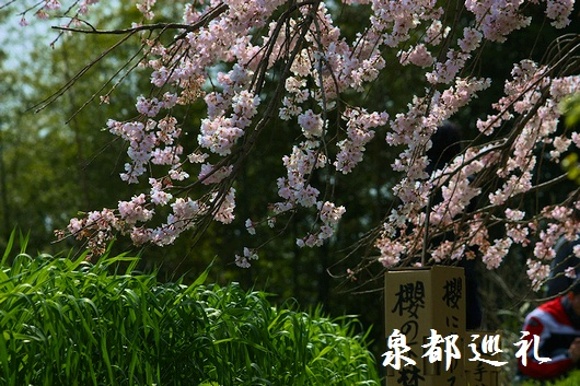 20090321houshouji03.jpg