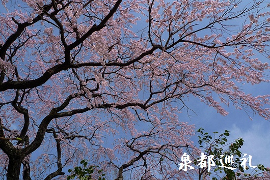 20090321houshouji04.jpg
