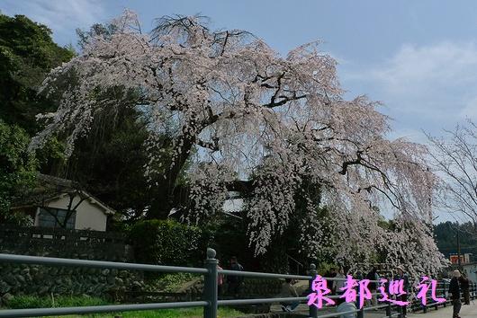 20090321ooharaooshidare05.jpg