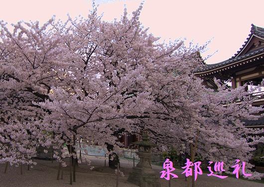 20090327touchoji01.jpg