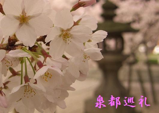 20090327touchoji02.jpg