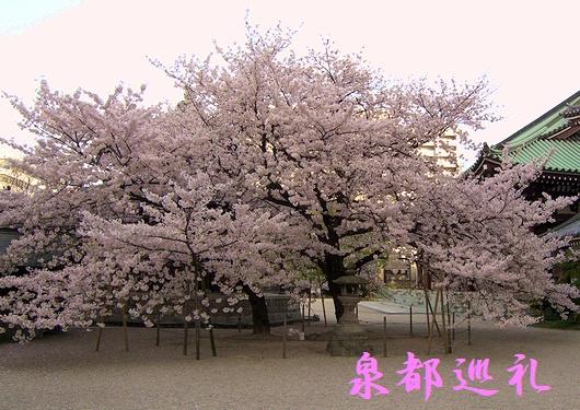 20090327touchoji04.jpg