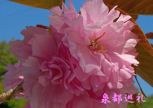 20090411isshinji01.jpg