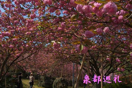 20090411isshinji03.jpg